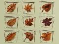 Metallic Evolution Leaves